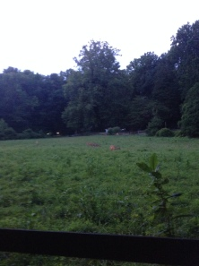 The meadow I pass on my run that is always filled with deer